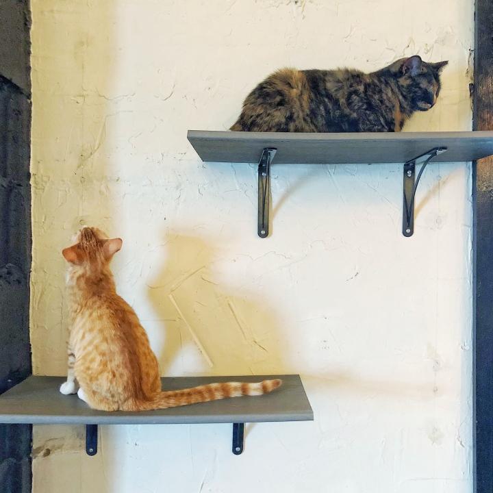 Rita + Tori at Mac Tabby Cat Café